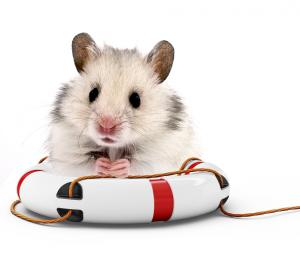 hamster-reducerad